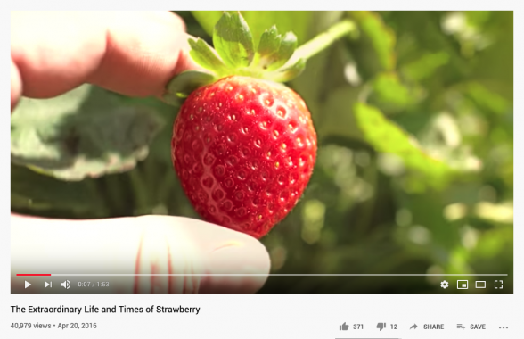 The Extraordinary Life and Times of Strawberry